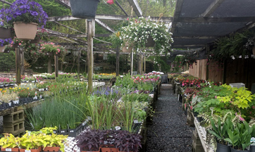 Annuals and Perennials For Sale