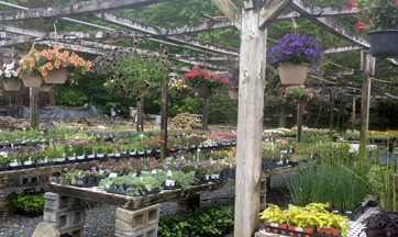 Hanging Baskets for Sale MD, DC, PA