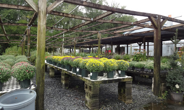 For Sale Plants, Trees, Shrubs, Annuals, Perennials
