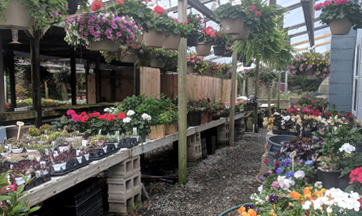 Flowering Blooming Plants for Sale Harford County MD
