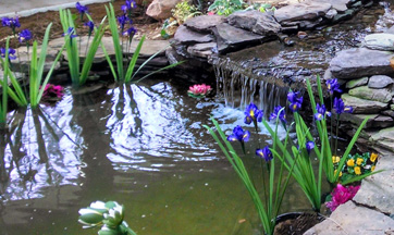 Pond and Water Garden Maintenace and Repairs DC, MD, PA